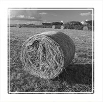 Bailed, a hay bale prepared for the winter feed, Peak District National park, England