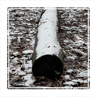 trunked, a felled log left and covered with snow, Coleshill, England